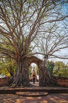 Mulher em pé sob uma grande árvore em um antigo templo em ayutthaya, tailândia