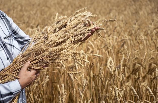 Mulher em um campo com buquê de trigo