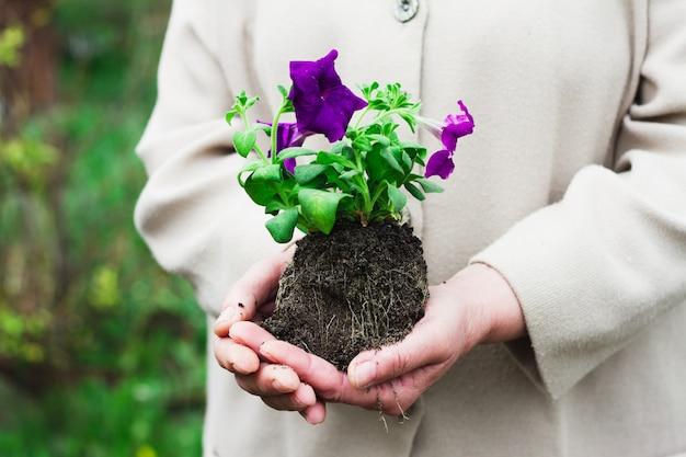 Mulher em um roupão cinza segurando uma flor roxa com a terra nos braços estendidos