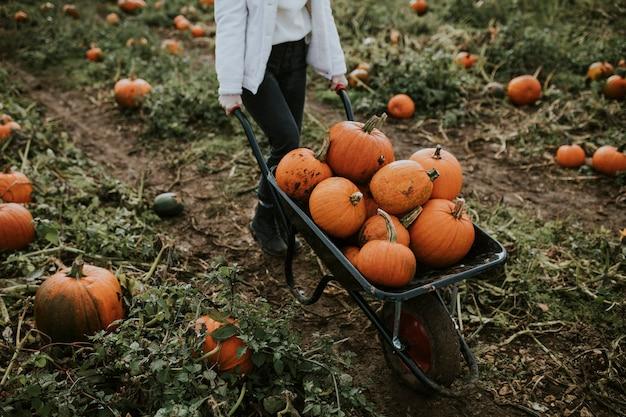 Mulher em uma plantação de abóboras antes do halloween