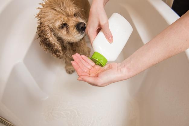 Mulher está derramando shampoo na mão