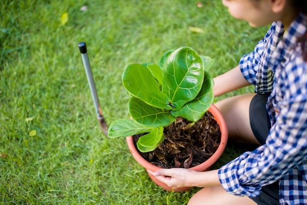 Mulher está plantando a árvore no jardim