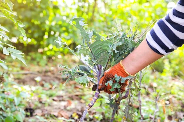 Mulher está plantando legumes na horta. luvas velhas e sujas. fazenda funciona no verão. plantas cultivadas em casa e alimentos ecologicamente corretos. tempo de colheita.