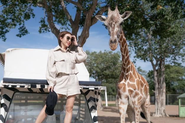 Mulher fazendo um passeio de ônibus, alimentando e brincando com a girafa no zoológico safari parque aberto.