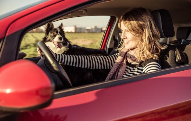 Mulher feliz dirigindo o carro com seu cachorro border collie