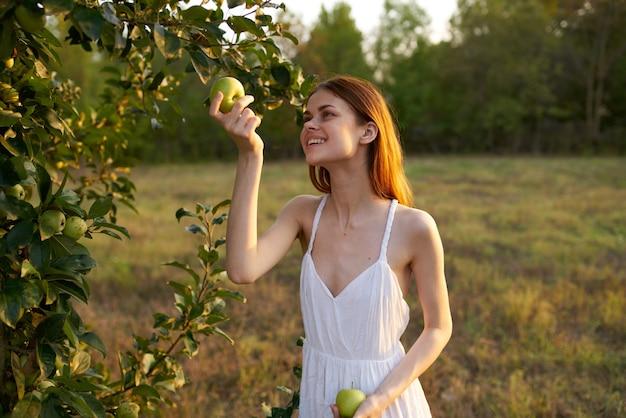 Mulher feliz em um vestido branco colhe maçãs de árvores em um prado