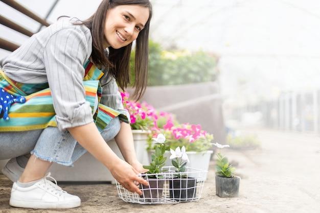 Mulher florista cultivava plantas de flores com folhas de pétalas transplantadas em caixa trabalhando em estufa