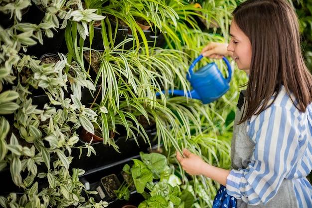 Mulher florista derramando água doce em fito módulo de vegetação vertical com plantas de clorophytum