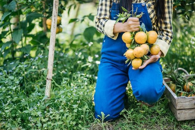 Mulher havesting plantação de laranja