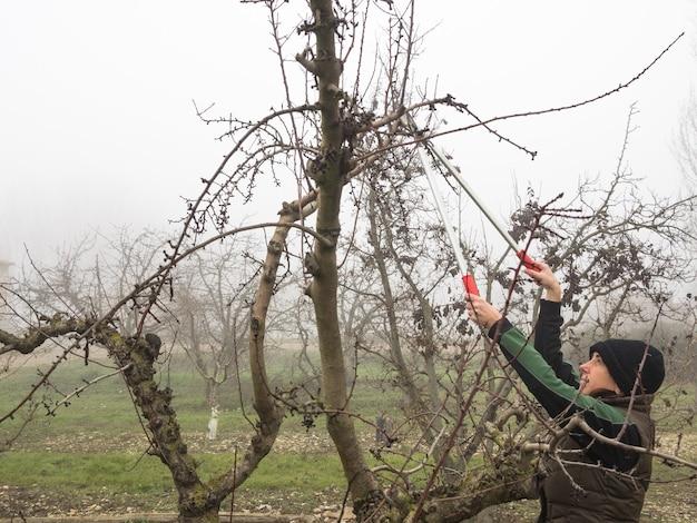 Mulher idosa com gorro de lã podando árvores frutíferas com tesoura em um dia de neblina
