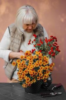 Mulher idosa positiva em roupas quentes casuais cuidando do crescimento de flores de margarida