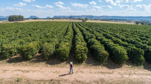 Mulher jovem agricultor, verificando sua plantação de café