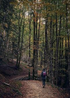 Mulher jovem, caminhadas no outono, na selva irati. floresta colorida no outono. floresta colorida de faias e abetos no outono