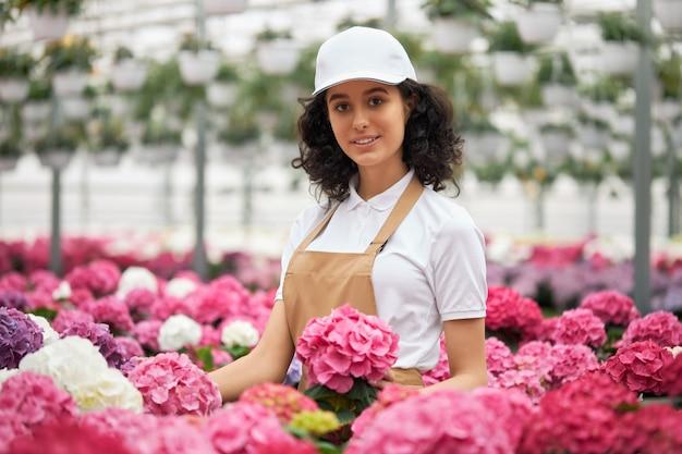 Mulher jovem com avental arrumando vasos com hortênsias coloridas