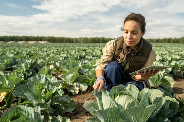 Mulher jovem com tablet cuidando do cultivo de repolho