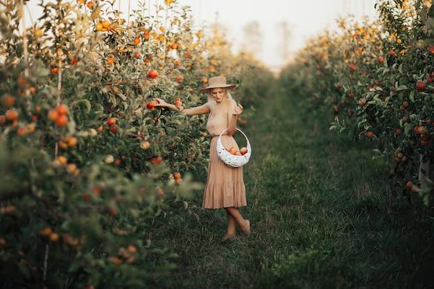Mulher jovem e bonita loira colhendo maçãs orgânicas maduras na luz do sol. conceito de agricultura, jardinagem, colheita e pessoas.