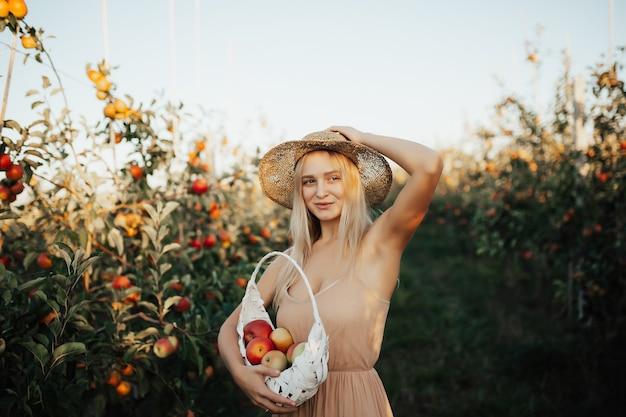 Mulher jovem e bonita loira colhendo maçãs orgânicas maduras na luz do sol.