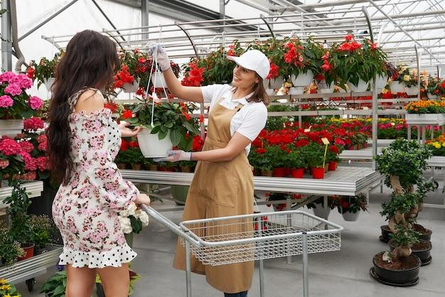 Mulher jovem escolhendo um vaso lindo com flores vermelhas