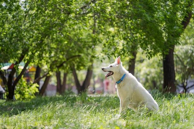 Mulher jovem feliz correndo com seu cachorro no parque.