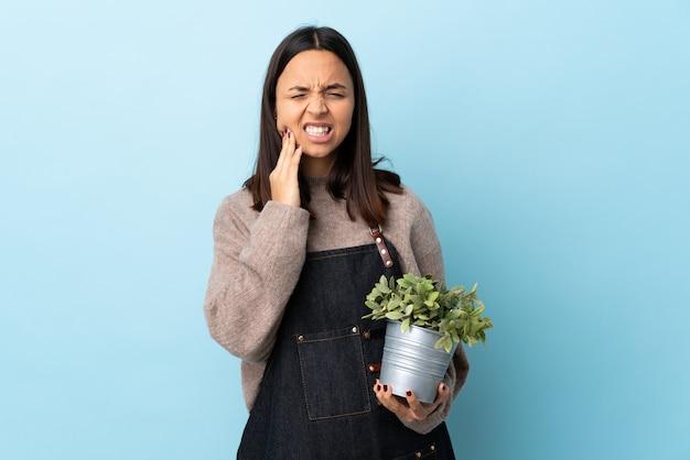 Mulher jovem morena de raça mista, segurando uma planta isolada parede azul com dor de dente