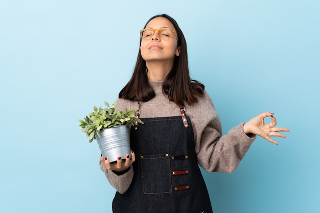 Mulher jovem morena de raça mista, segurando uma planta sobre parede azul isolada em pose de zen