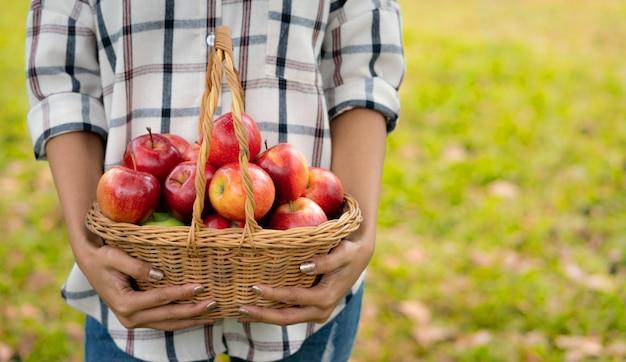 Mulher jovem, segurando, um, maçãs, em, cesta, após, colheita, de, maçã, fazenda