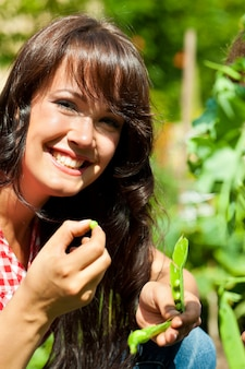 Mulher jovem sorridente, colhendo ervilhas