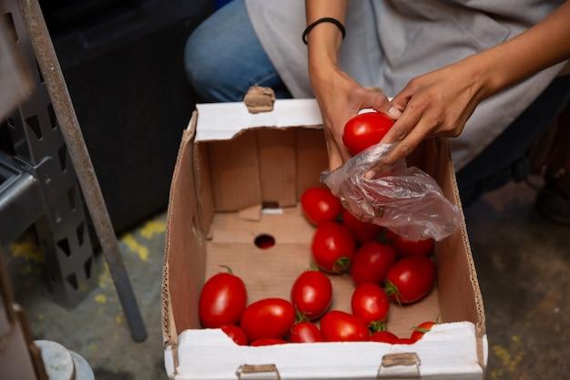 Mulher latina embalagem tomates em saco plástico