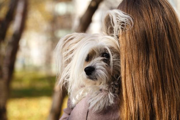 Mulher linda jovem feliz com cabelos compridos, segurando o cachorro pequeno