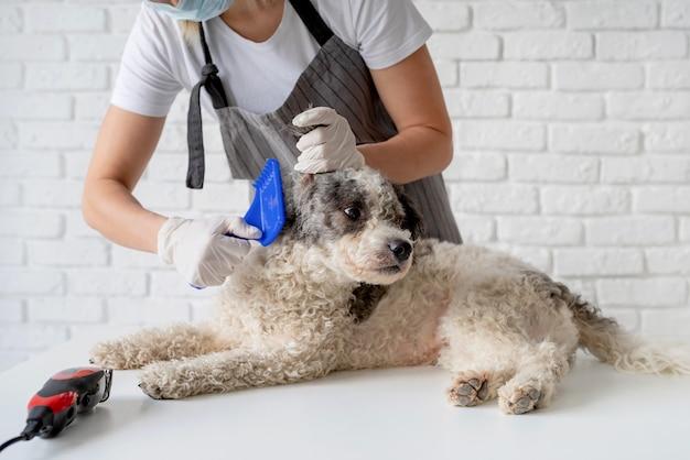 Mulher loira em uma máscara e luvas enfeitando um cachorro em casa