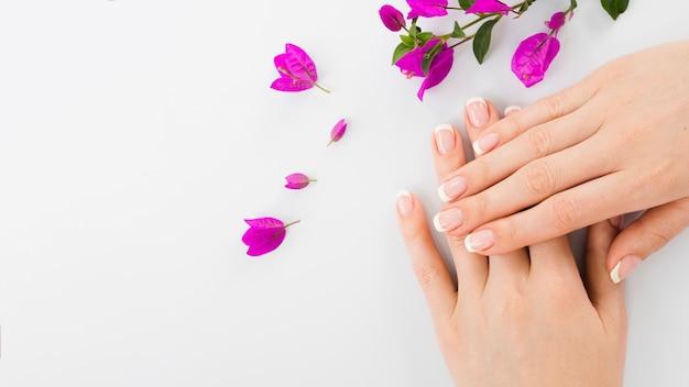 Mulher, mãos, e, flores, com, espaço cópia
