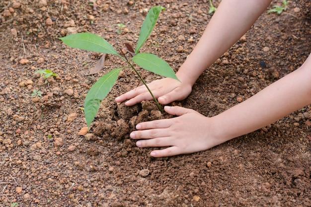 Mulher, mãos, plantar, a, árvore jovem