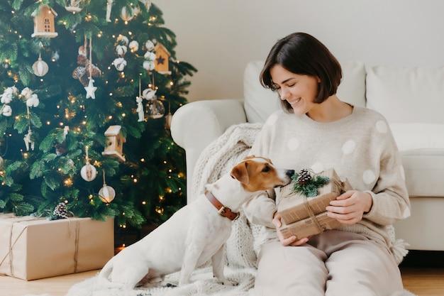 Mulher morena positiva mantém a caixa de presente, passa o tempo livre, juntamente com o cão de raça, pose na sala de estar no chão com a bela árvore de natal decorada.