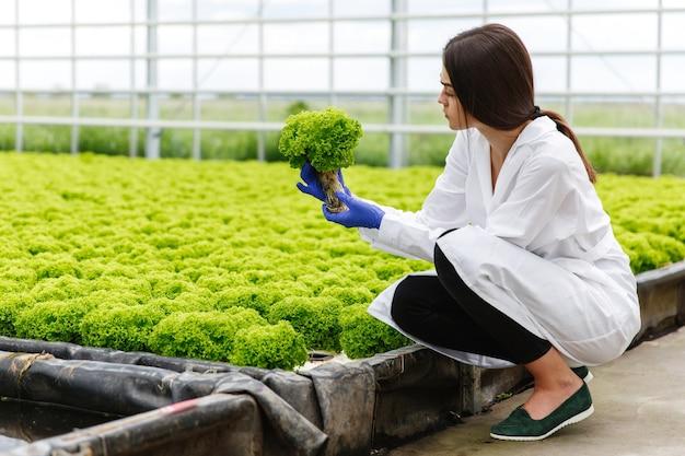 Mulher no manto de laboratório examina cuidadosamente plantas na estufa