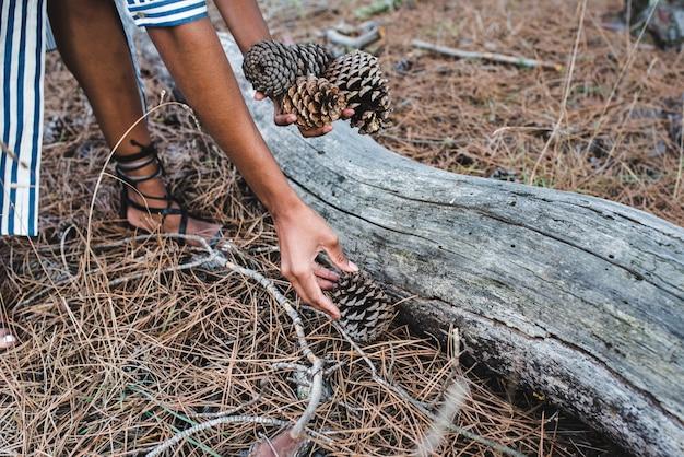 Mulher pegando cones de coníferas perto de um grande tronco de árvore