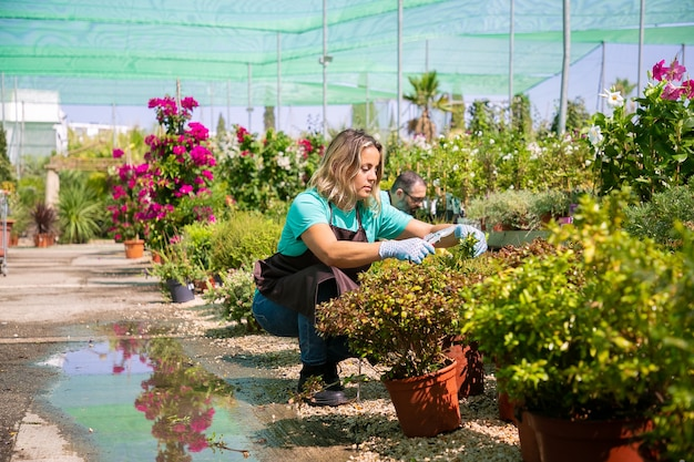 Mulher pensativa, cultivando plantas em vasos em estufa, cortando galhos com podador. tiro amplo, copie o espaço. conceito de trabalho de jardinagem