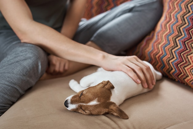 Mulher petting jack russel terrier cachorrinho no sofá