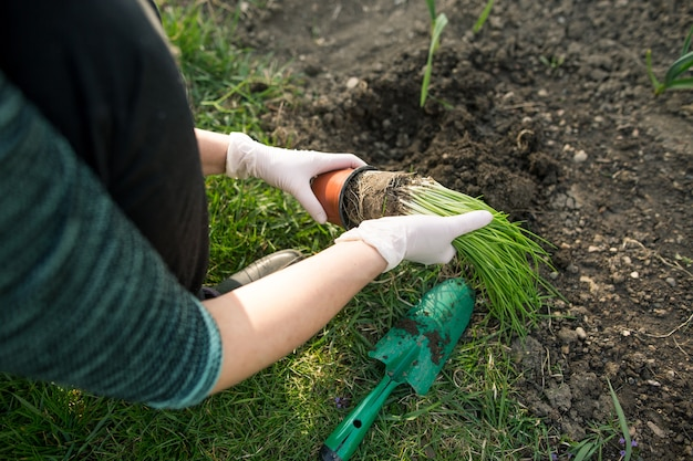 Mulher plantando cebolinha em seu enorme jardim durante a adorável primavera, conceito de jardinagem