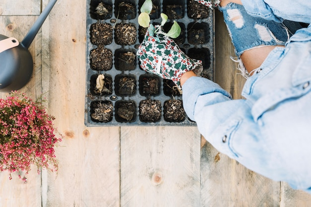 Mulher plantando mudas na bandeja