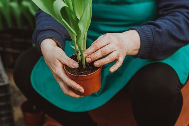 Mulher plantando tulipas