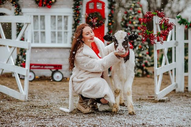 Mulher posando com um jovem touro preto e branco na fazenda de natal com uma decoração do feriado.
