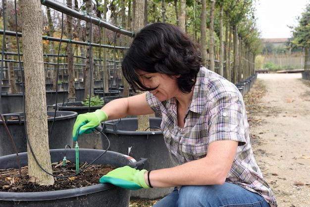 Mulher, preparar, um, gotejamento, irrigação, em, um, centro jardinagem