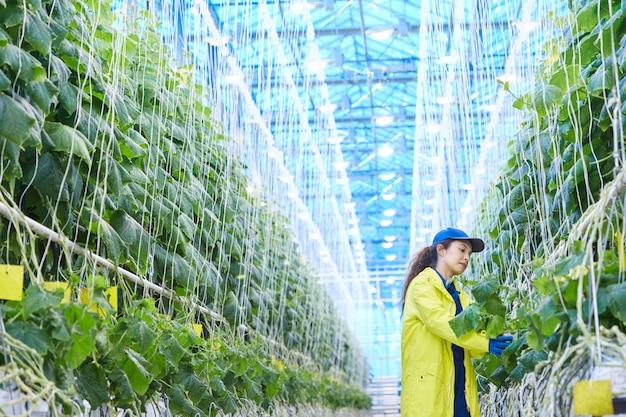 Mulher que trabalha na plantação de vegetais