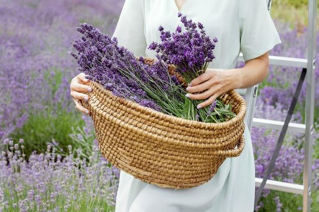 Mulher recolhe lavanda em cesta de palha senhora de vestido e chapéu no campo de lavanda
