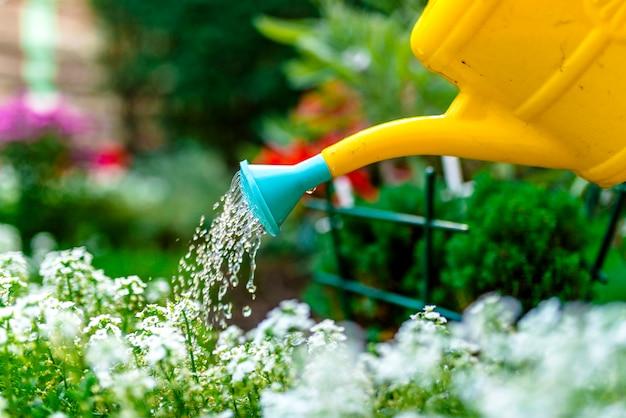 Mulher regando plantas lá fora no verão. jovem que trabalha no jardim