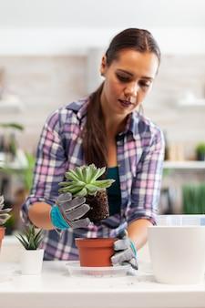 Mulher replantando a planta de casa na cozinha. segurando uma flor suculenta na câmera, plantando em um vaso de cerâmica usando uma pá, luvas, solo fértil e flores para a decoração da casa.
