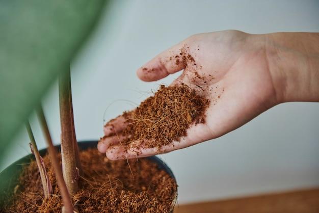 Mulher repotenciando uma planta de casa