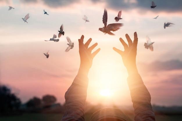 Mulher rezando e pássaro livre, apreciando a natureza no fundo por do sol, conceito de esperança