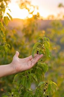 Mulher segura, árvore sai, mão