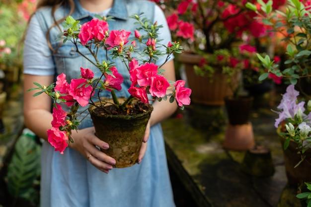 Mulher segura envasamento de folhas verdes e closeup de flor de botões vermelhos. florescendo azalea plantas com flores.